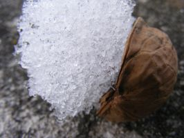 Snow nut by TomorrowPhotographer
