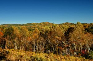 Lines of Hills and Trees by TimLaSure