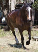 STOCK - 2014 Sep Tolly-14 by fillyrox