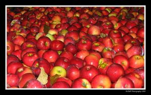 Apple Bath by picworth1000wrds