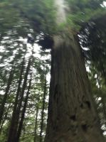 The Redwoods by moonblade138