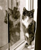 Kitten On A Window Sill by MissSpocks
