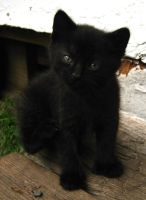 Black Kitten 1 by Jenna-RoseStock