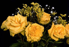 Yellow Roses by muffet1