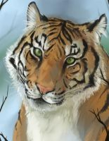 Animal Portrait - Tiger by DanjiIsthmus