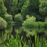 Green Pond by InternalMigrant