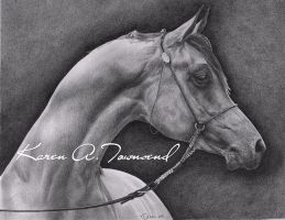 Arabian by Karentownsend