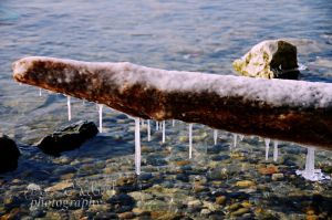 frozen branch at the lake by seasfairytale