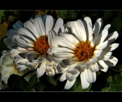 another flower by xavierus