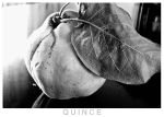 Quince in Black and White by cavinton