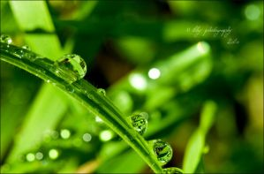 After the Rain by ILTBY