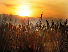 Marsh Grasses and Sunset Flare by houstonryan