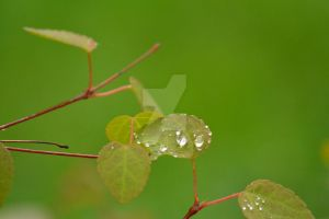 Drops by Happylovelycherry