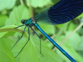 Dragonfly by Mihaela7