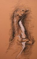 weasel study by AgnesPterry
