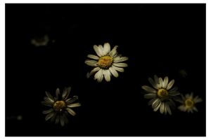 Flower by megadef