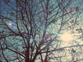 Sunlight through the trees 3 by Photoartistic26