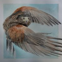 Harris hawk water colour by BecciES