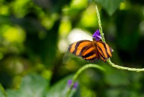 Butterfly_8745 by creative1978