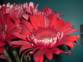 Red Carnation 2 by sickcatstock