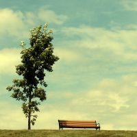 Bench with a view. by incredi