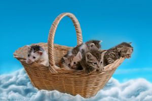 Basket full of kitten-cuteness by hoschie