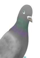 Pigeon by Marie8D