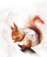 Squirrel by Elsouille