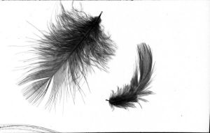 Feathers by semireal-stock