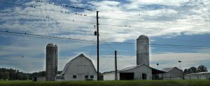 Birds At The Farm by LDFranklin
