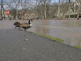 04-04-05 Delaware River Flood2 by DarkPhazon395