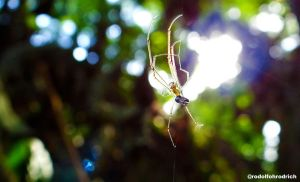 Spider by Rrodrigues