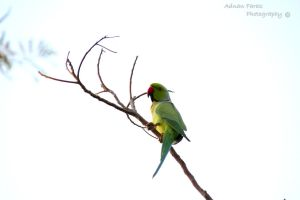 Parrot.Two by JuiceMonkey610