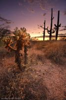 Sunset in the Sonoran Desert by austinboothphoto