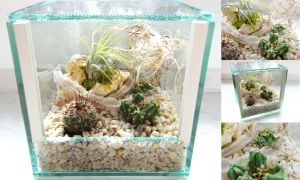 mini-terrarium with exuviae 2 by Isisnofret