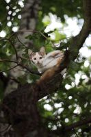 Arboreal Cat by panna-cotta