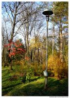 fall in the park II by Korni