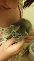 One of Rosie's Kittens by Bowser14456