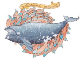 North Atlantic Right Whale by golden-quince