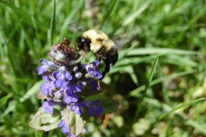 Busy Bee by HiddenWithinMyself