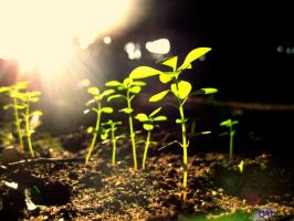Springs First Sprouts by Artstrong4life