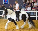 STOCK - 2014 Total Equine Expo-85 by fillyrox