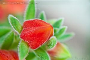 Hairy Flower by Zarevic-A