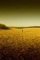 Cornfield by j-adree