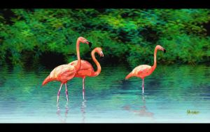 Flamingos by EnigmaResolve