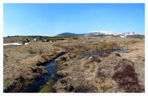 Peat-bog at Spring. by InnerTruth