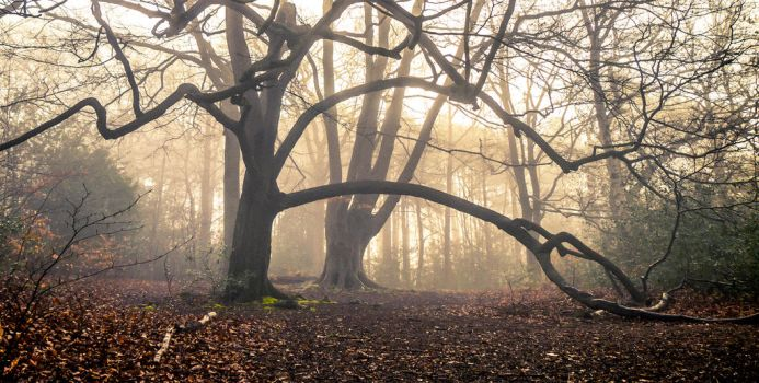Guardians of the woodland by paulsinclair1