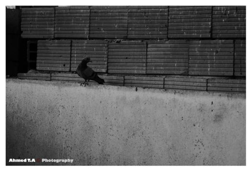 :: A Lonely Bird :: by iStamfordHeart