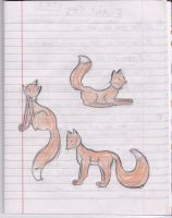 Foxes :3 by caspisan