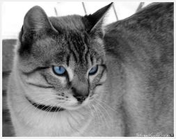 Blue Eyes by StreetCatProject